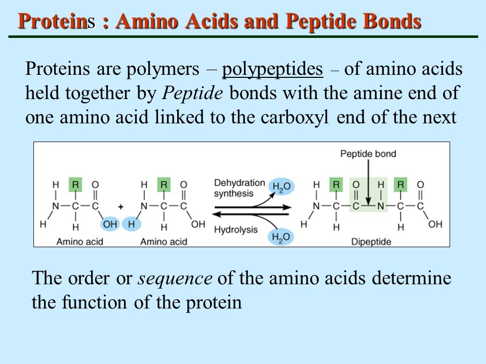 BASIC BIOCHEMISTRY FOR BIOLOGY - ppt video online download Proteins Amino Acids And Peptides