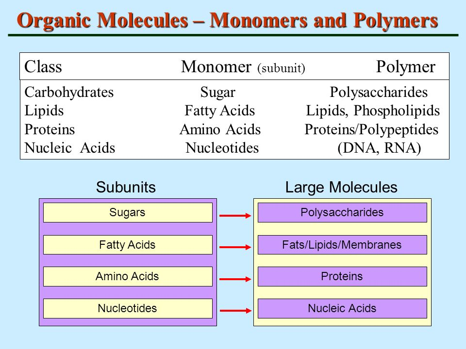 carbohydrates proteins lipids and nucleic acid Major elements in biological molecules: proteins, nucleic acids, carbohydrates, and lipids.