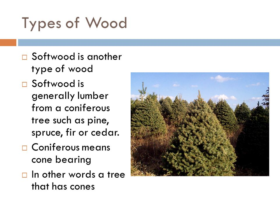 Wood technology ppt download