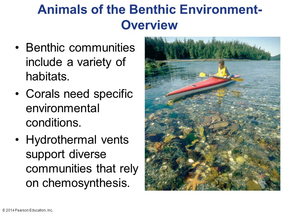 animals of the benthic environment Much is known about these aquatic animals water flow strongly influences the lotic benthic environment the benthic invertebrate fauna of inland waters.