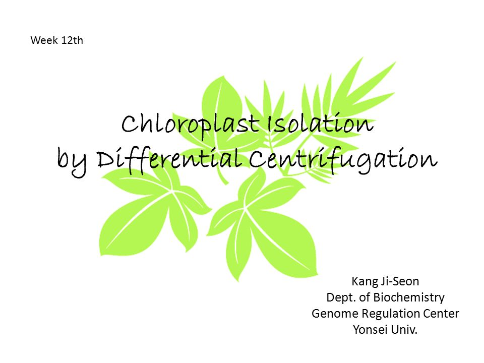 experiment 3 isolation of chlorophyll from Description: this lab report is about the extraction of spinach and how the  spinach contains different pigments that are seen in different colors also, each.