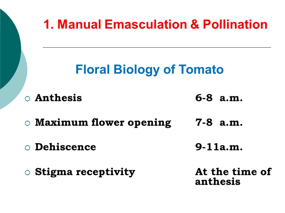 anthesis in tomato Develop a mathematical model to predict days after anthesis (daa) in tomato fruit from changes in the blossom end color around 160 tomato flowers from 40 plants of a tomato cultivar 'rutgers' and the nearly.