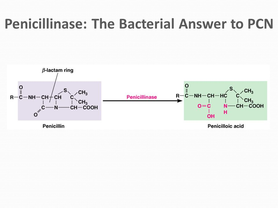 Penicillinase: The Bacterial Answer to PCN