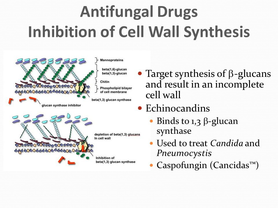 Antifungal Drugs Inhibition of Cell Wall Synthesis