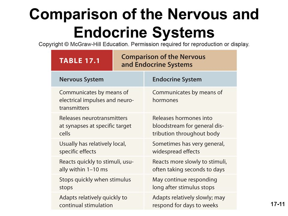 the nervous and the endocrine systems Revise human endocrine system for with bbc bitesize for gcse combined  science, edexcel  like the nervous system, hormones can control the body.