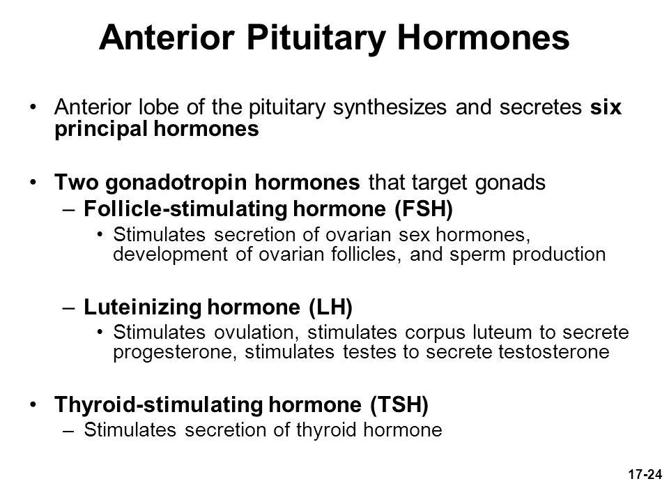 What is Sperm? Hormones responsible for sperm production