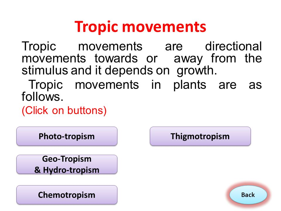 nastic movement in plants pdf