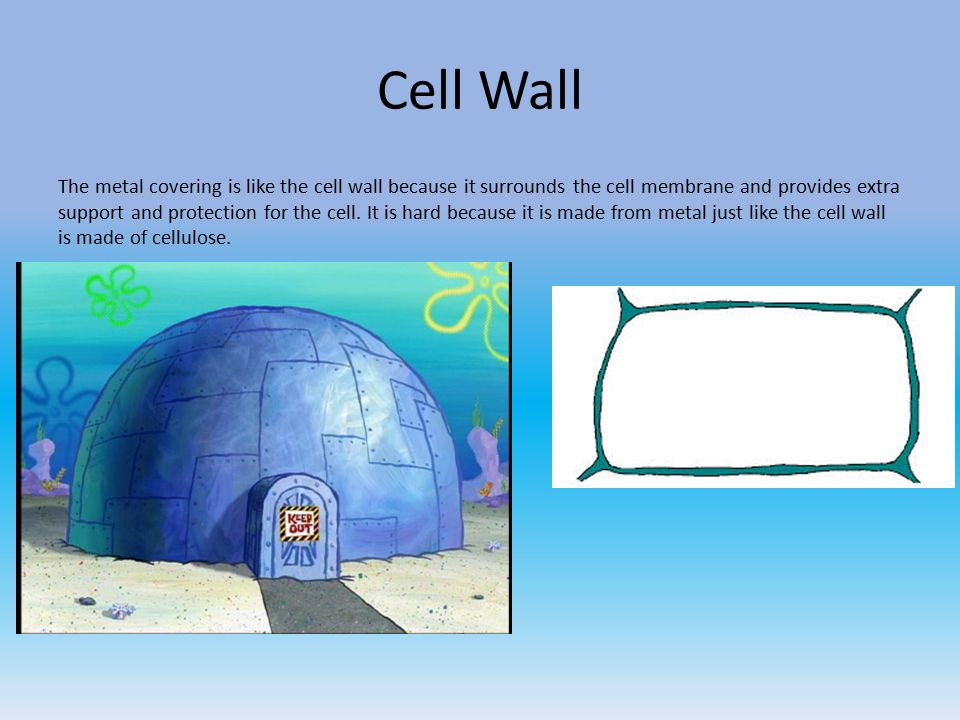 Cell Analogies Spongebob Theme Ppt Video Online Download
