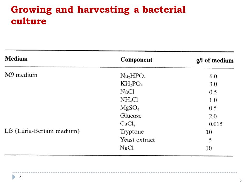 how to get rid of bacterial contamination in cell culture