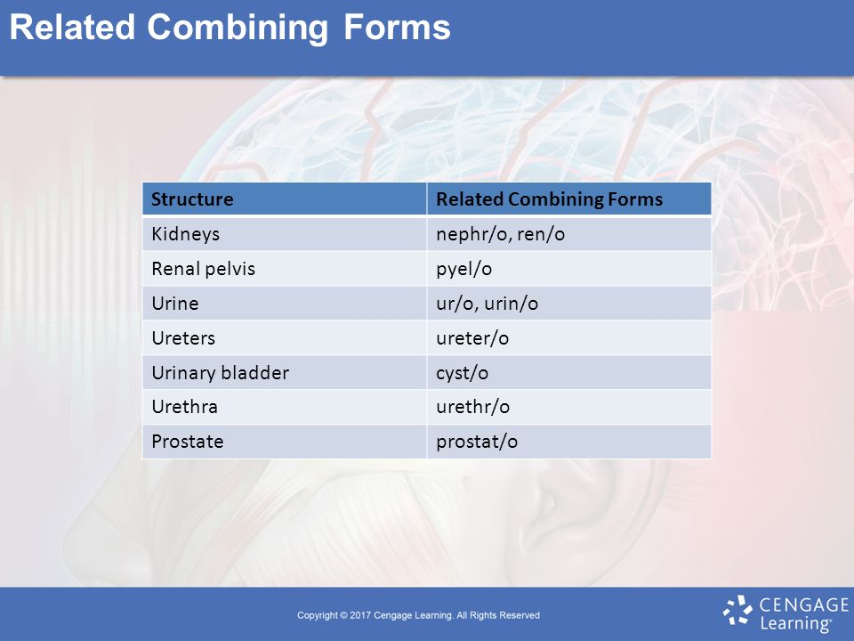Chapter 9 The Urinary System. - ppt video online download