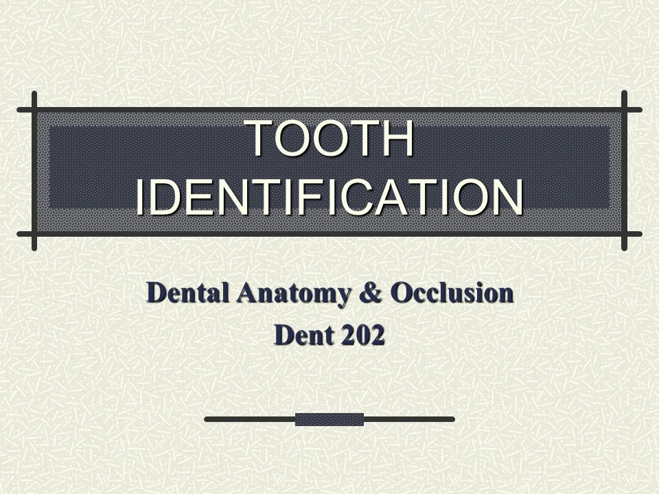 Dental Anatomy & Occlusion Dent ppt video online download