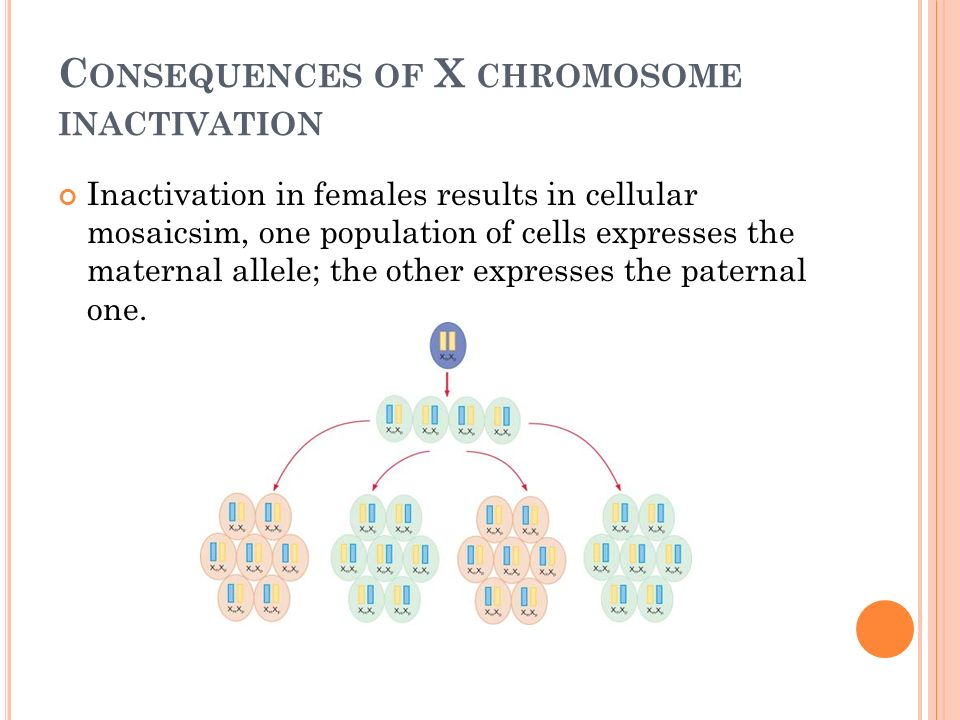 silence of the xs x chromosome inactivation X-chromosome inactivation (xci) is a classic epigenetic phenomenon associated with many large ncrnas  to the initiation of chromosome-wide silencing, the xs.