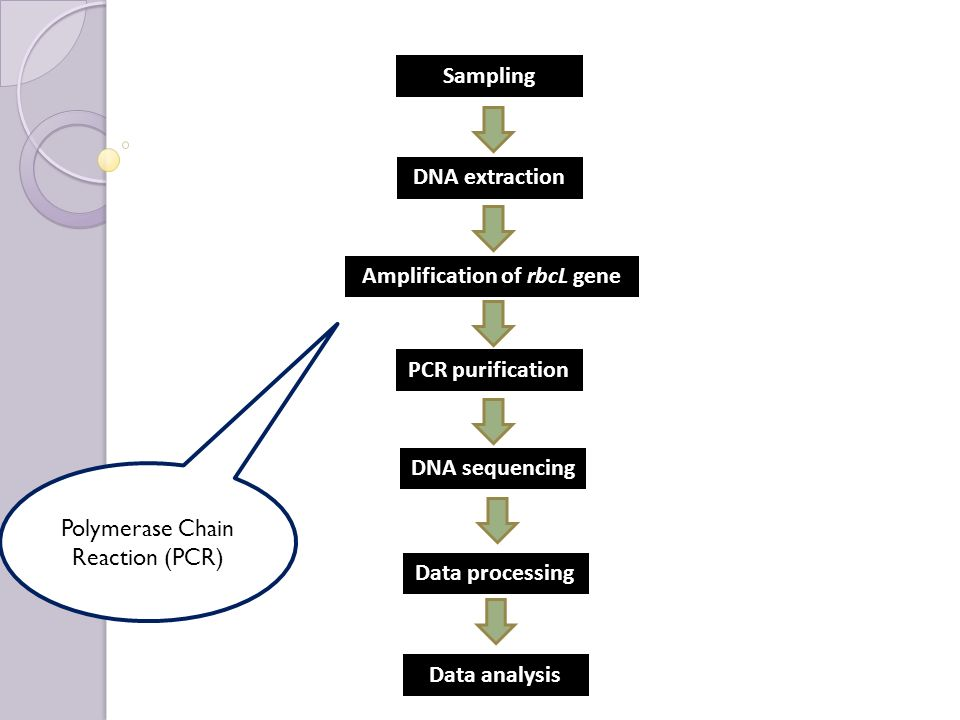 A comparative computational study of the 'rbcL' gene in ...