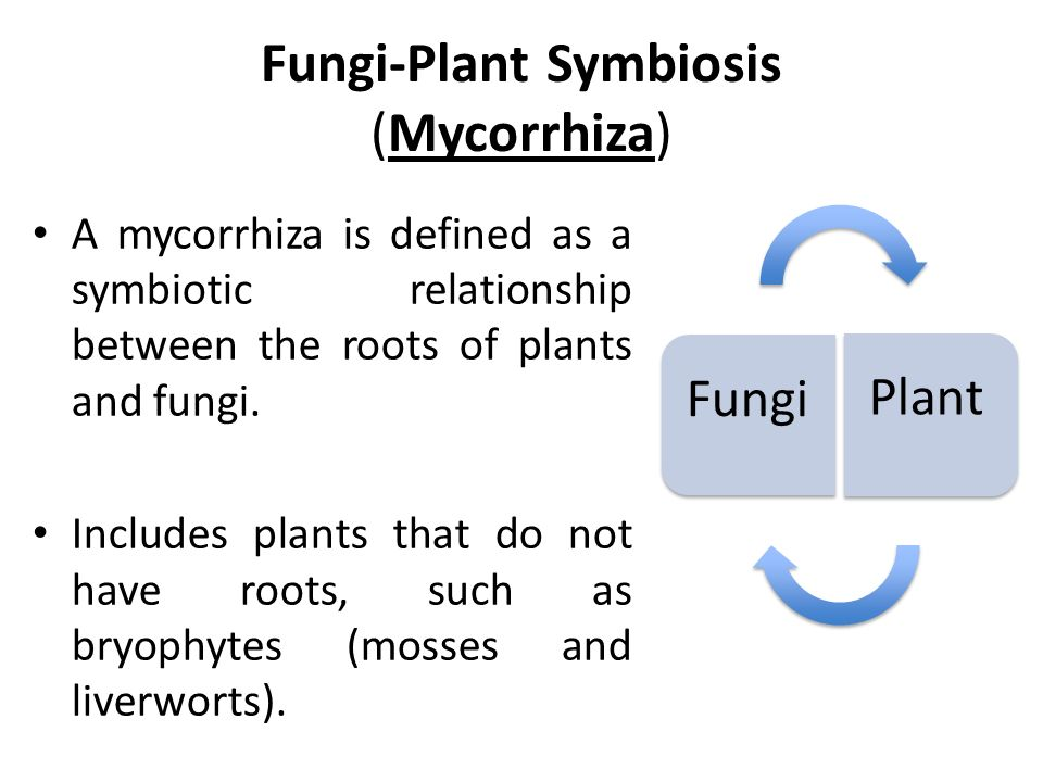 symbiotic relationship between lichen and mycorrhizae products