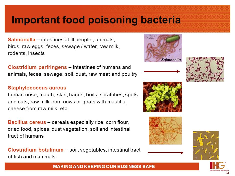 Food hygiene safety ppt download for Raw fish food poisoning