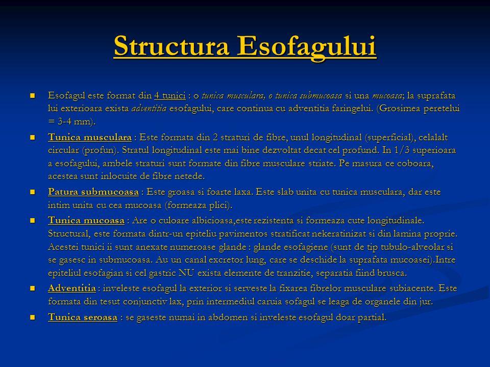 Structura Esofagului