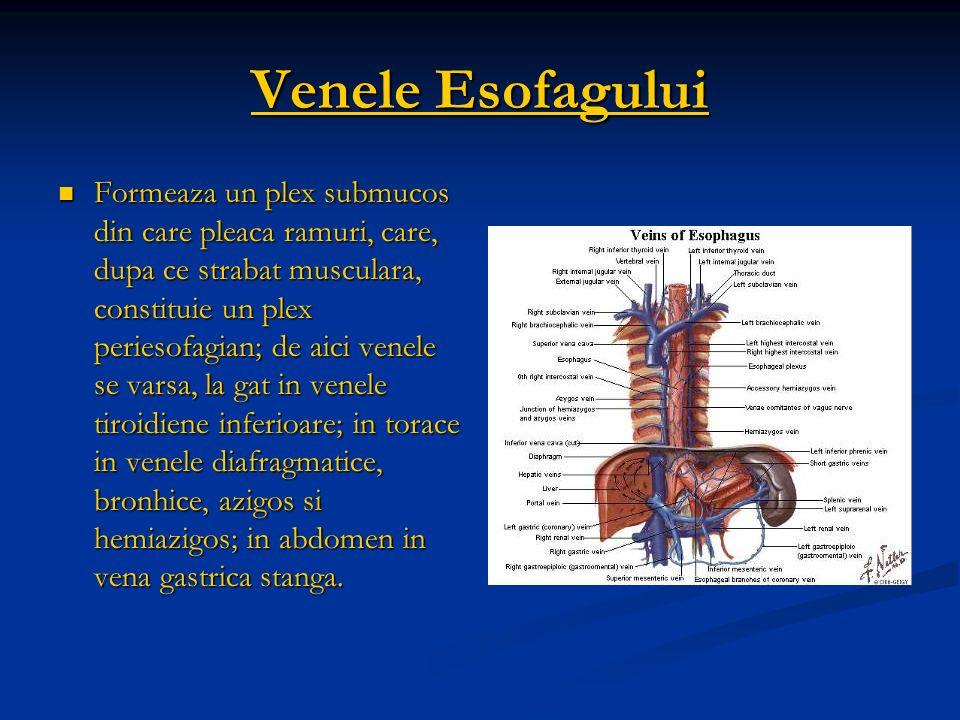 Venele Esofagului