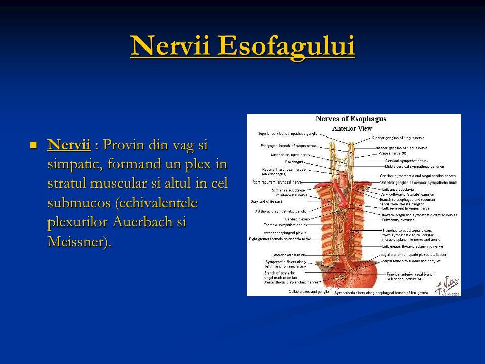 Nervii Esofagului