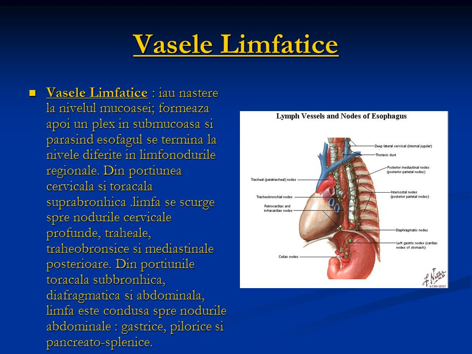 Vasele Limfatice