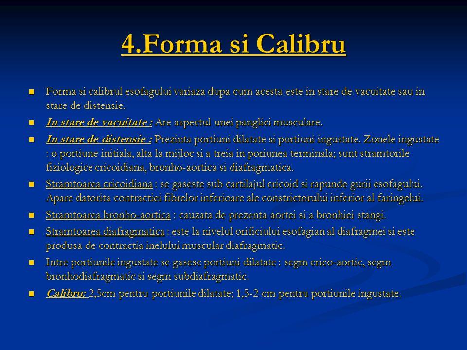 4.Forma si CalibruForma si calibrul esofagului variaza dupa cum acesta este in stare de vacuitate sau in stare de distensie.