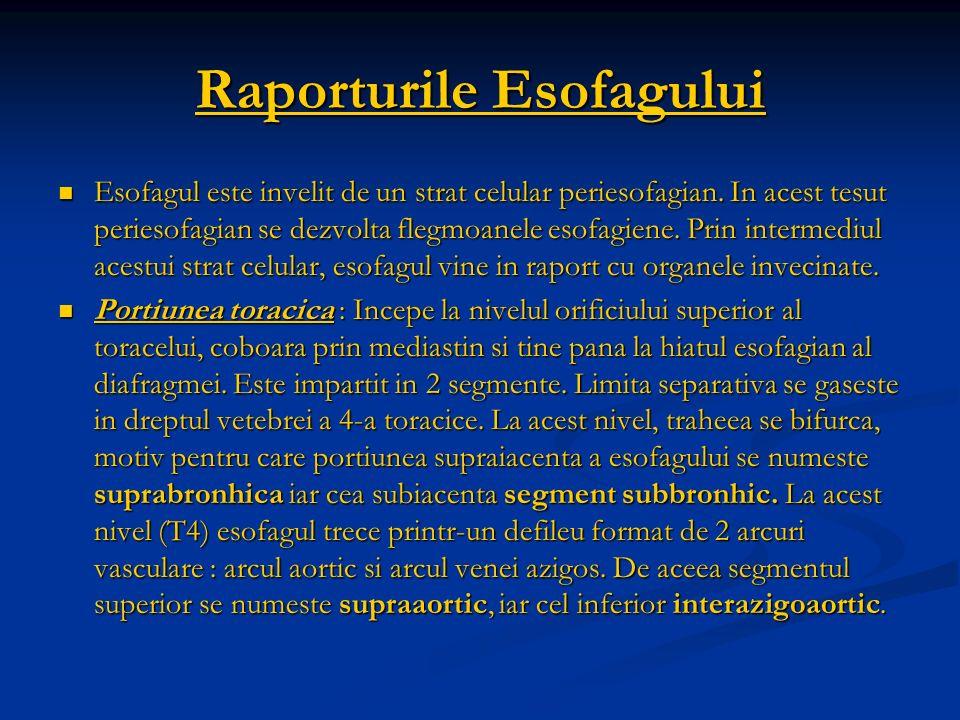 Raporturile Esofagului