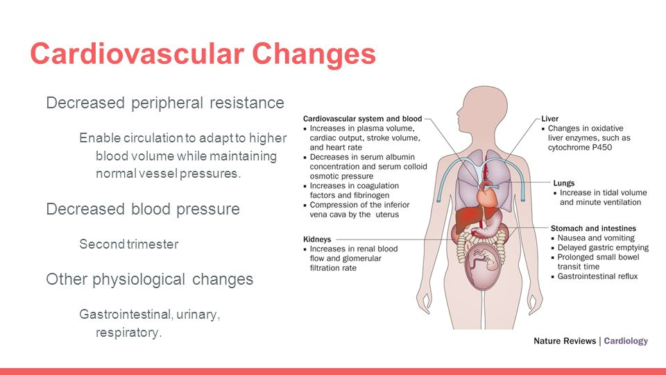 Physiological Changes During Pregnancy - ppt video online