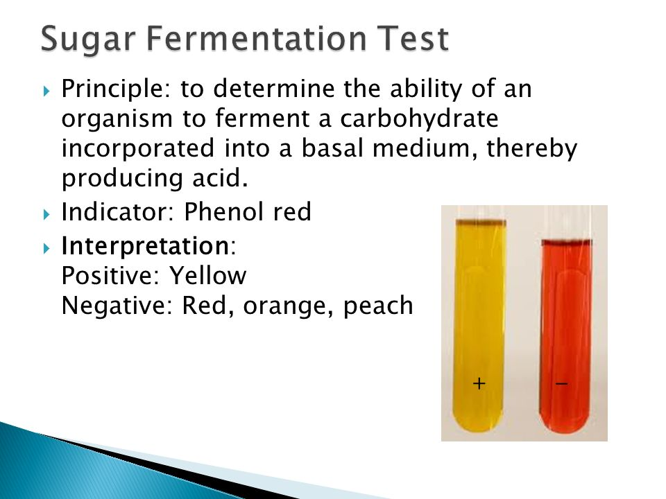 lab report carbohydrate fermentation Biology fermentation lab report $ all plant and animal cells use a process known as cellular respiration to make atp from carbohydrates lab report.