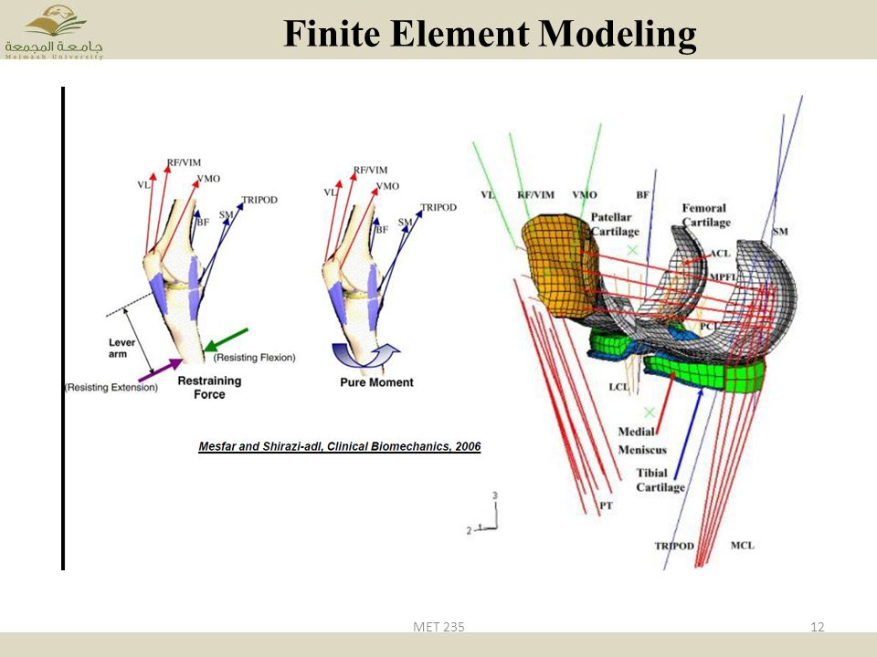 Chapter one what is biomechanics met ppt video online for Finite elemente modell