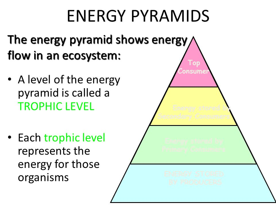 What Percentage Of Energy Is Lost At Each Trophic Level