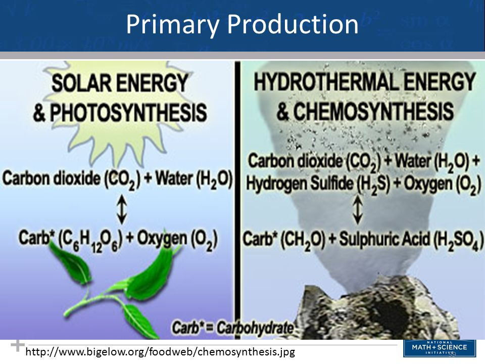 Production of chemosynthesis