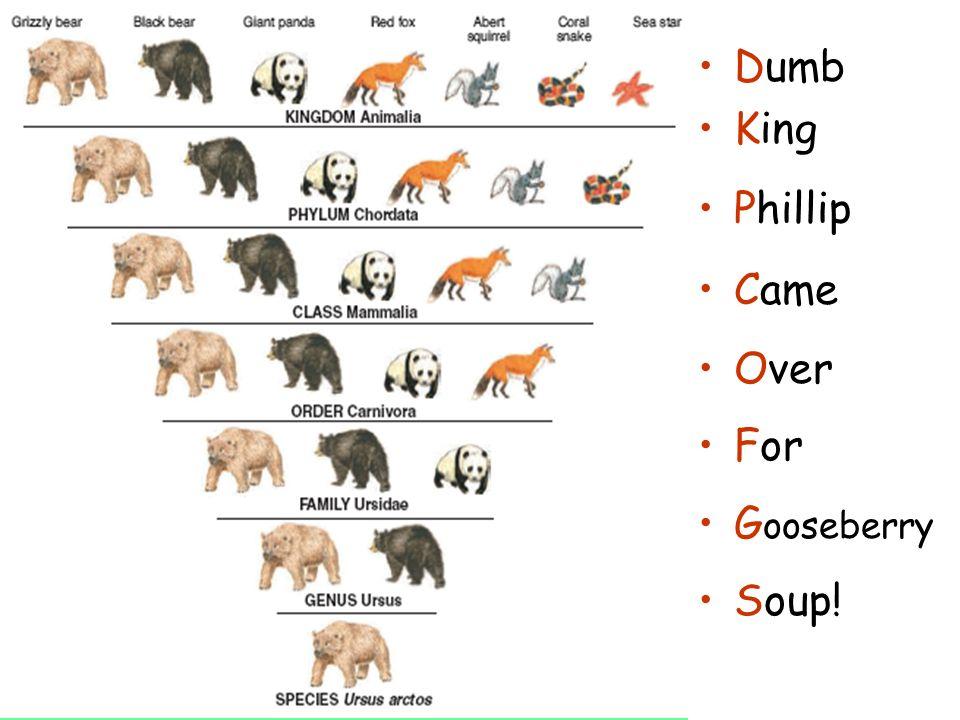 Linnaeus  definition of Linnaeus by The Free Dictionary