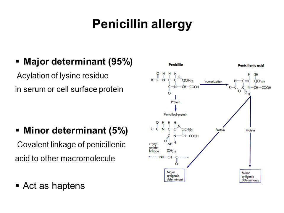 Penicillin allergy Major determinant (95%) Minor determinant (5%)