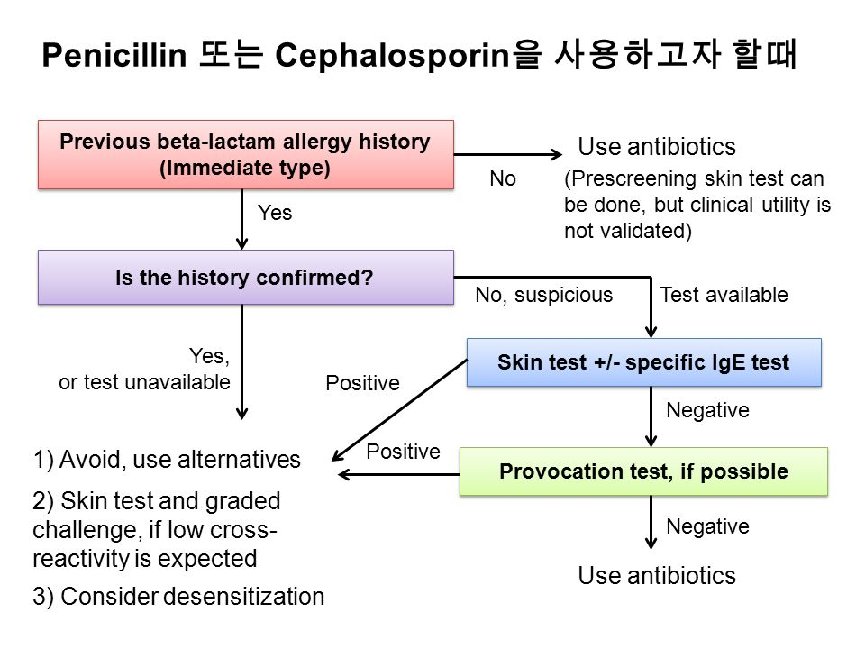 Penicillin 또는 Cephalosporin을 사용하고자 할때
