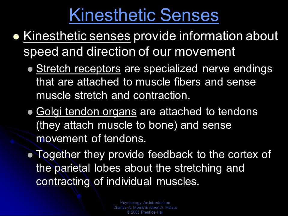 kinesthesis sense of active movement At this point it is necessary to discuss what seems to be a lack of agreement, if not outright confusion, about just what kinesthetic sense or empathy is the dictionary defines kinesthesia, coming from the greek roots to move + perception, as the sensation of position, movement, tension, etc of parts of the body, perceived.