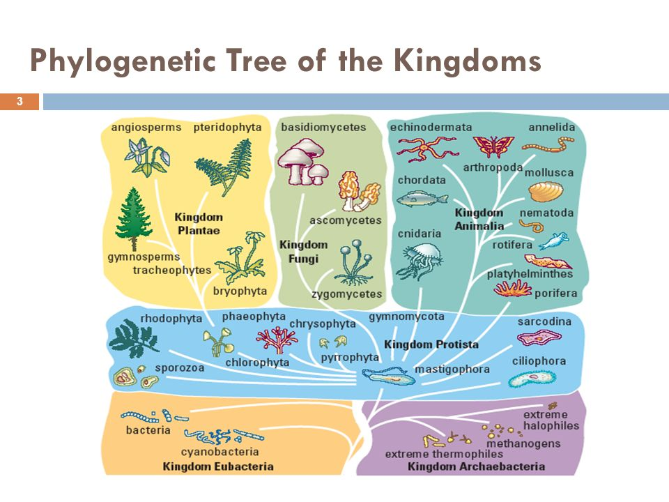 Flowchart furthermore Phraya Nakhon Cave furthermore Slide as well Phyloge ic Tree Of The Kingdoms together with Behind The Rise Of The Anti Trump Twitter Conspir Dblbig. on food web diagram