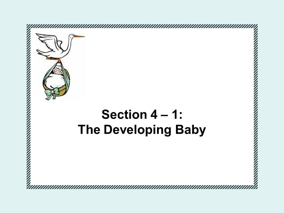 Section 4 – 1: The Developing Baby