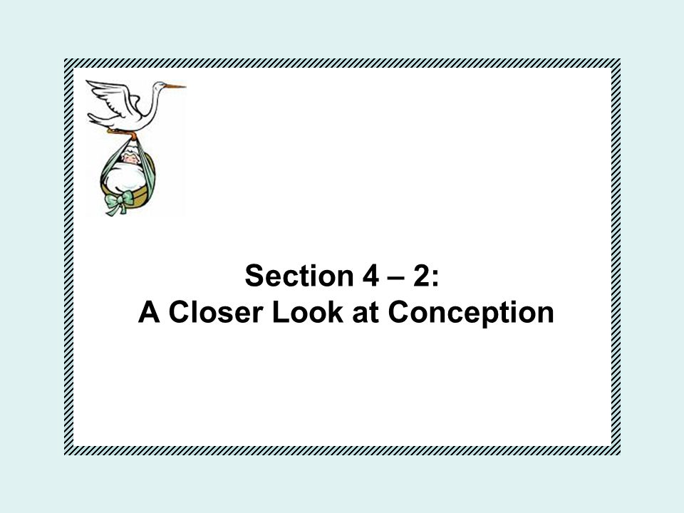 Section 4 – 2: A Closer Look at Conception