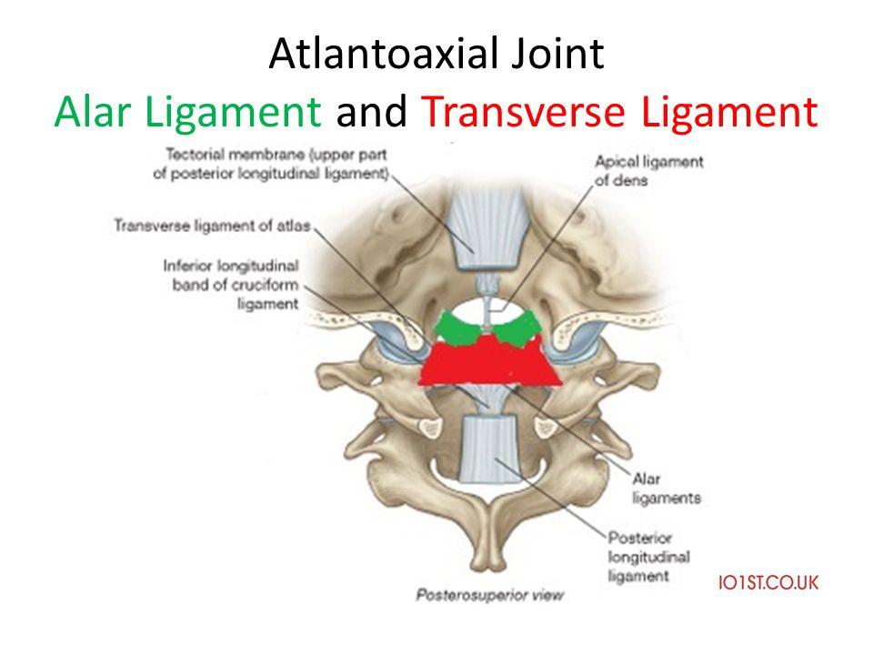 Atlanto occipital joint anatomy