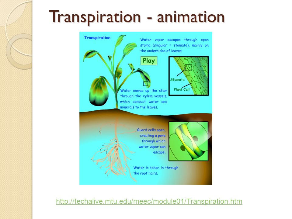 water and sugar transport in plants Water transport the movement of plants from water to land has necessitated the development of internal mechanisms to supply all the parts of the plant with water.