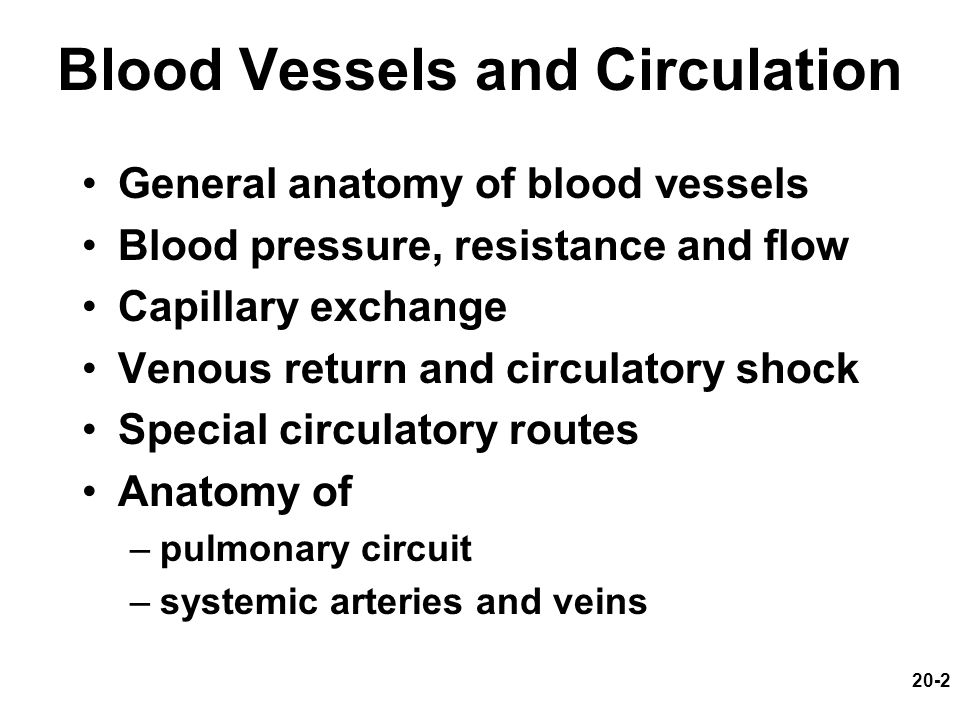 Chapter 20: Blood Vessels and Circulation - ppt video online download