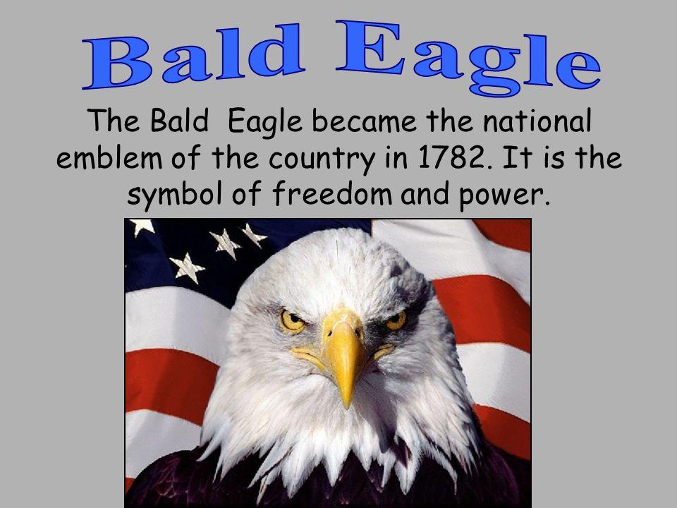 Bald Eagle Us National Emblem American Bald Eagle Dinocrofo