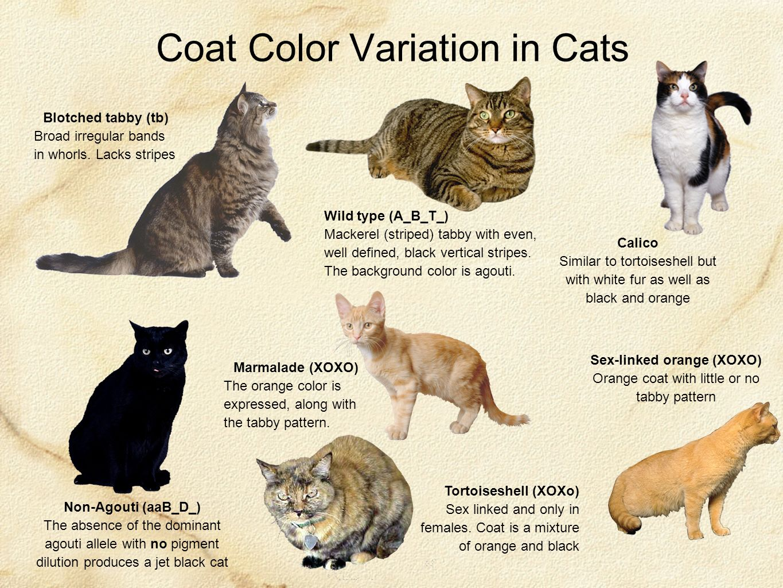 Traits Of Black Cats