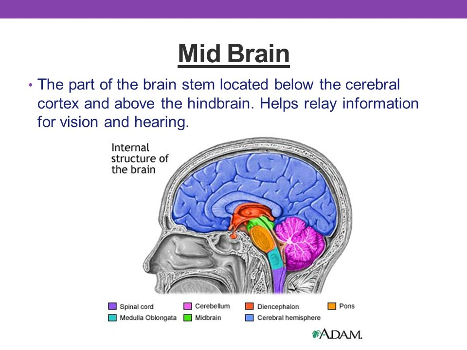 an introduction to parts of the brain A very basic introduction to brain structure and function.