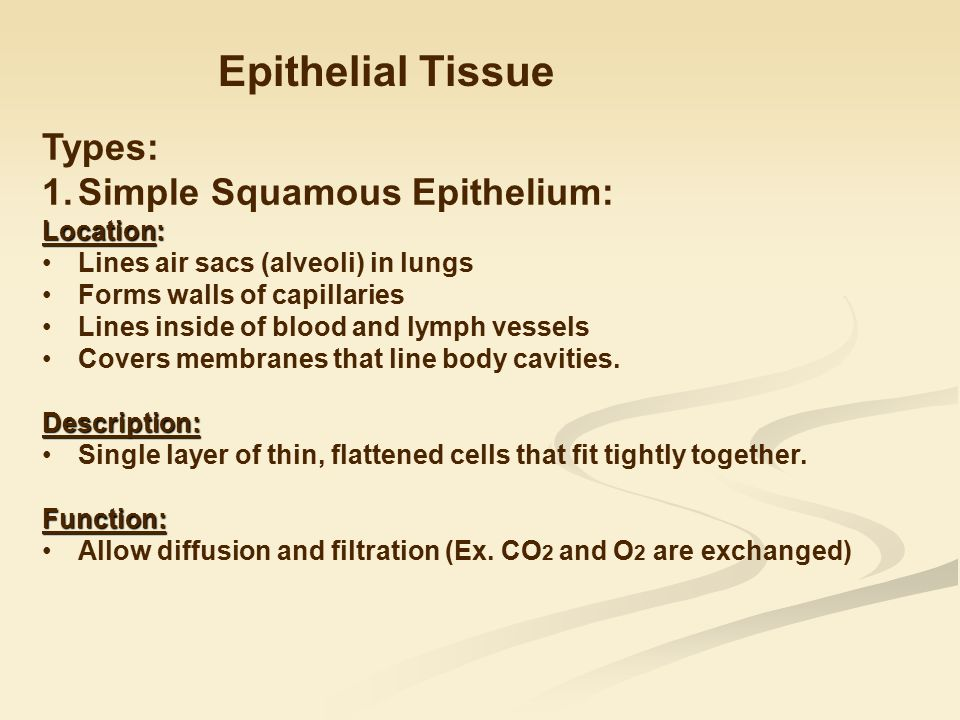 epithelial tissue functions and locations Epithelial tissue for those of you who grew up playing with legos, you surely  would have noticed that, despite the wide variety of shapes and colors, they were .