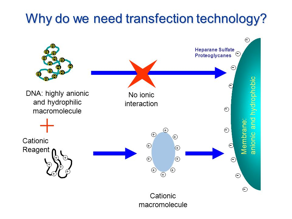 leading transfection technology