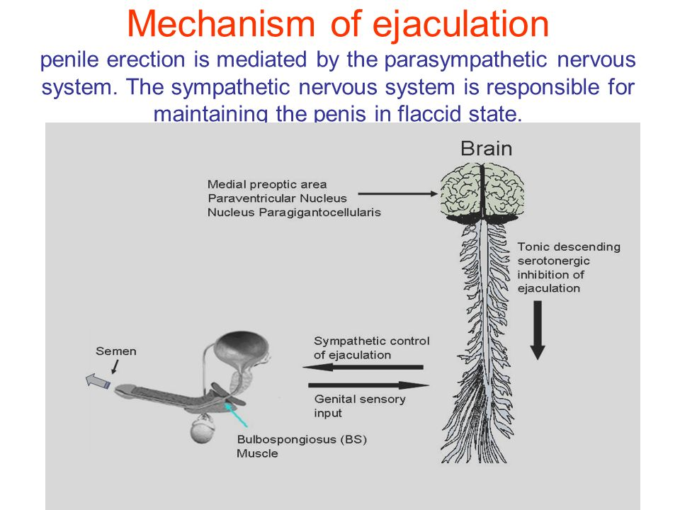 what is the relationship between sympathetic and parasympathetic nervous systems