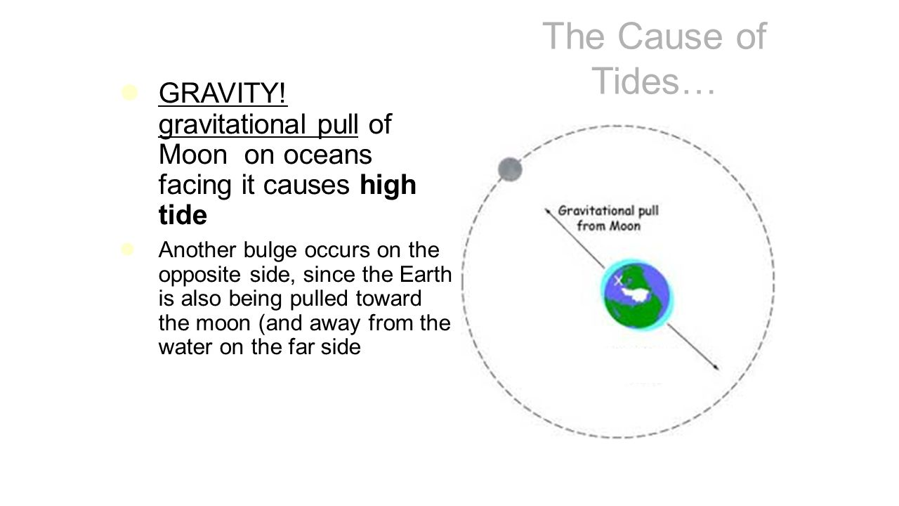 Tides and the moon what causes tides ppt video online download what forces heavenly bodies cause the tides nvjuhfo Image collections