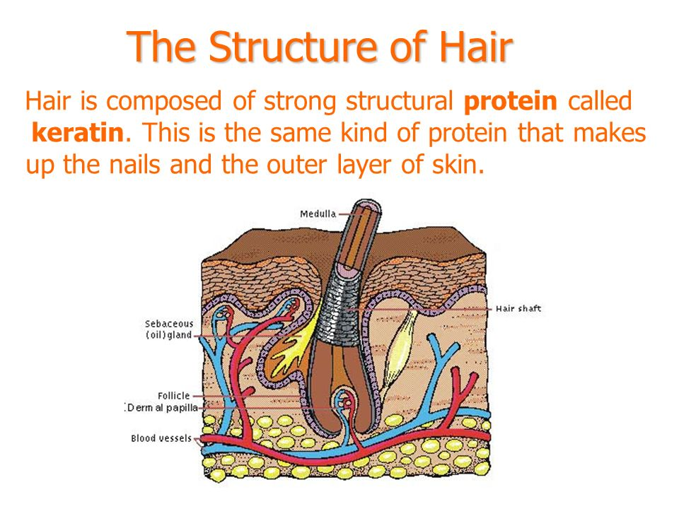 The Integumentary System Ppt Video Online Download