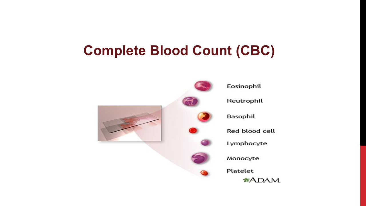 1 complete blood count (cbc)