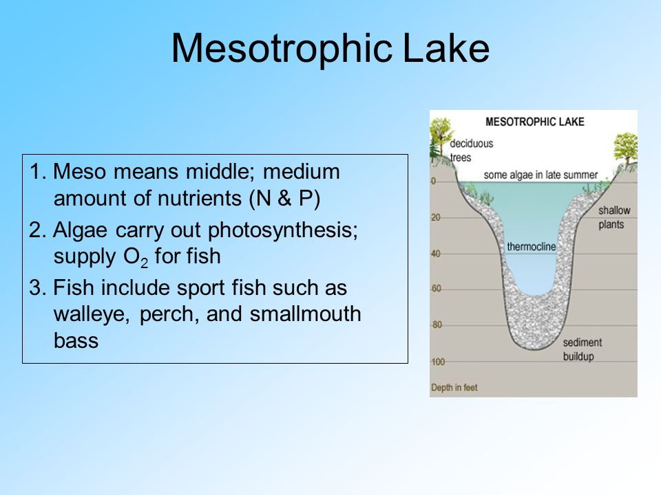 Mesotrophic Lake - ThingLink